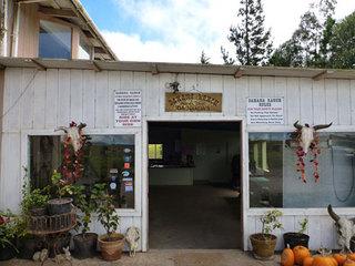 ハワイ島ダハナランチ(牧場)