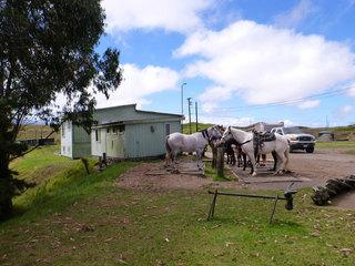ダハナランチの馬たち